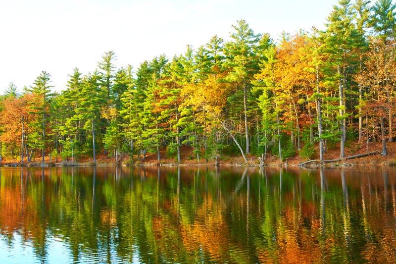 Stagno nella foresta nazionale della montagna bianca, New Hampshire fotografie stock