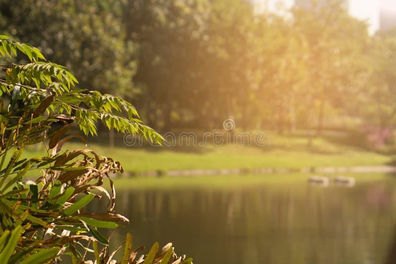 Stagno in parco pubblico con l'aumento di Sun fotografie stock