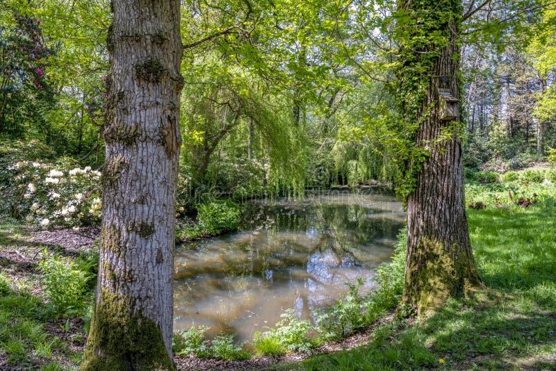 Stagno tranquillo in un giardino inglese del paesaggio in primavera di un giorno soleggiato nel Regno Unito immagini stock libere da diritti