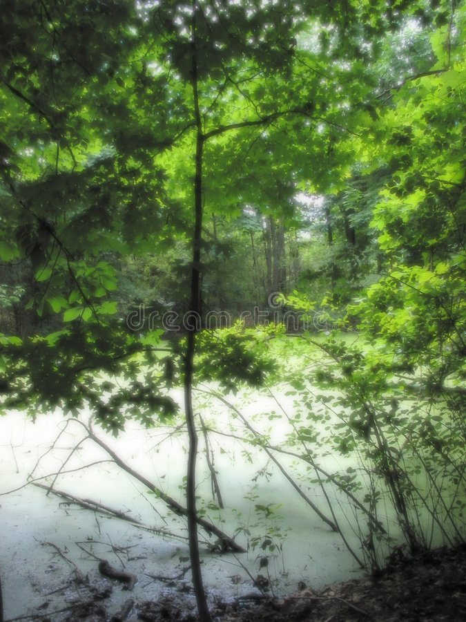 Stagno in un giardino fotografie stock libere da diritti