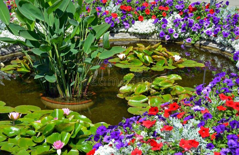 Stagno variopinto del giardino di estate immagine stock libera da diritti
