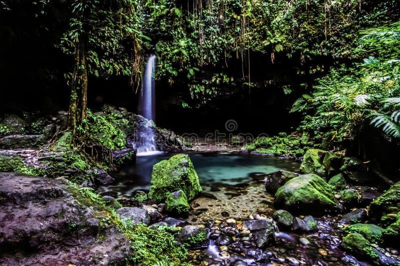 Stagno verde smeraldo in giungla fotografia stock libera da diritti