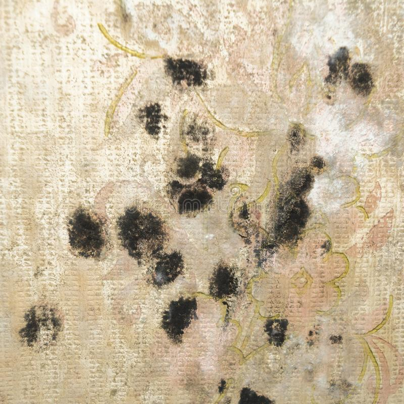 Download Stains Of Black Mold On Old Wallpaper Close Up Stock Photo