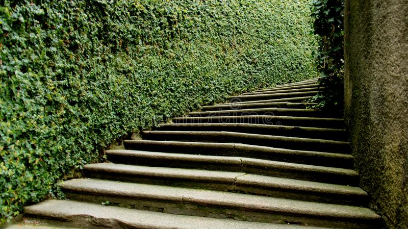 Green Fences And Step. Stair and green leaves fences with sunlight quiet garden in Italy stock image