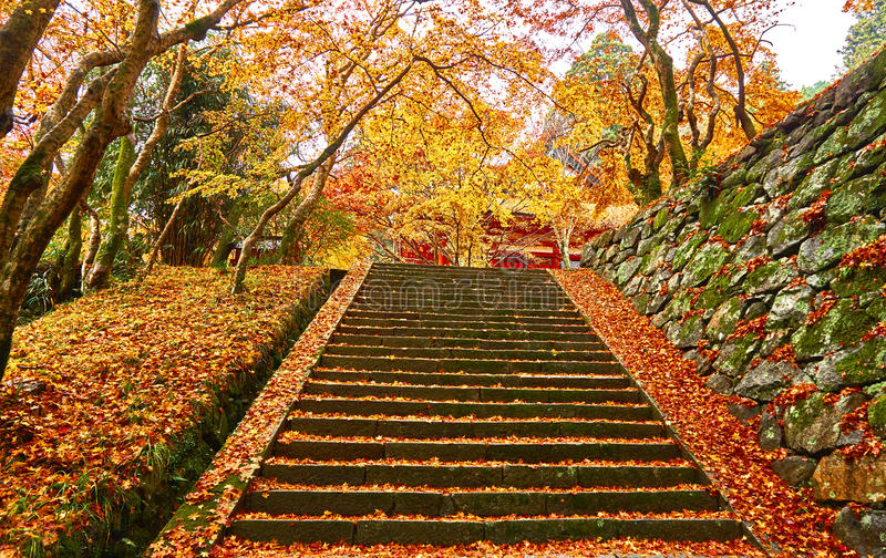 Stair way in autumn. Stone stairs are covered with colorful autumn leave royalty free stock photo