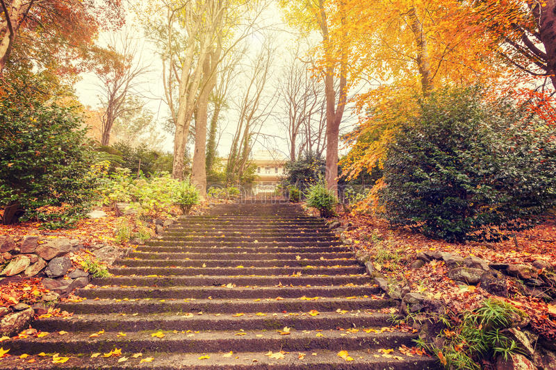 Staircase leading to a mansion with golden trees stock photo