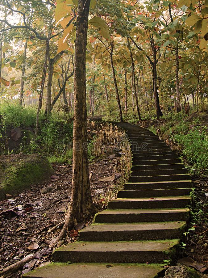 Steps in the middle of the autumn forest stock image