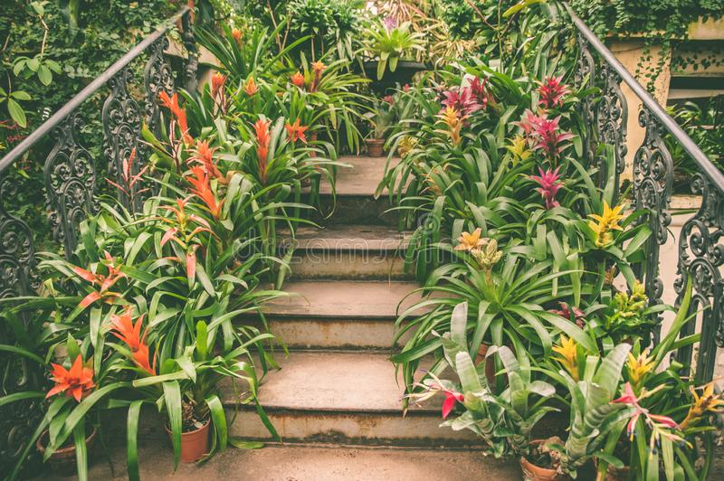 Staircase leading up is lined with pots with colorful tropical plants and flowers, an exotic royalty free stock photos