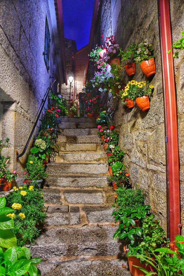 Staircase at night with flowers. Climb stairs to a mystery in a dark park. stock photography