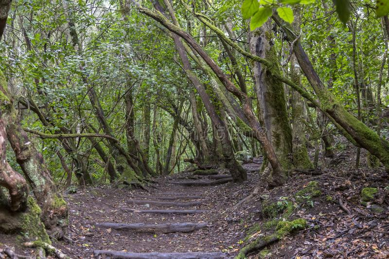 Staircase and path  in forest at Garajonay park. La Gomera, Canary Islands. royalty free stock image