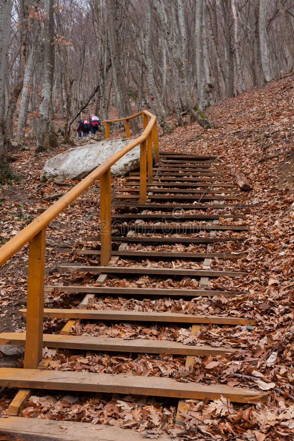 Download Stairs in autumn forest stock image. Image of orange - 36699057