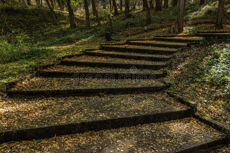 Stairs in city park covered with yellow leaves stock photo