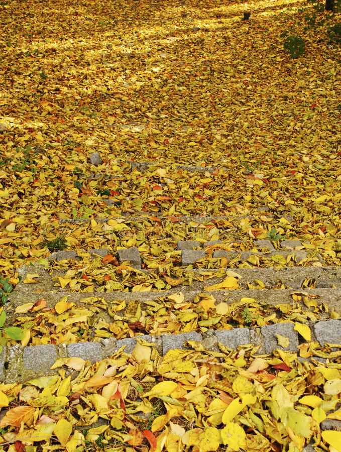Download Stairs covered with leaves stock photo. Image of stairs - 25792750