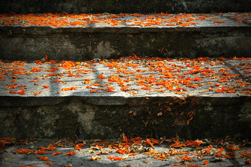 Stairs with fall orange flowers and lights stock photo