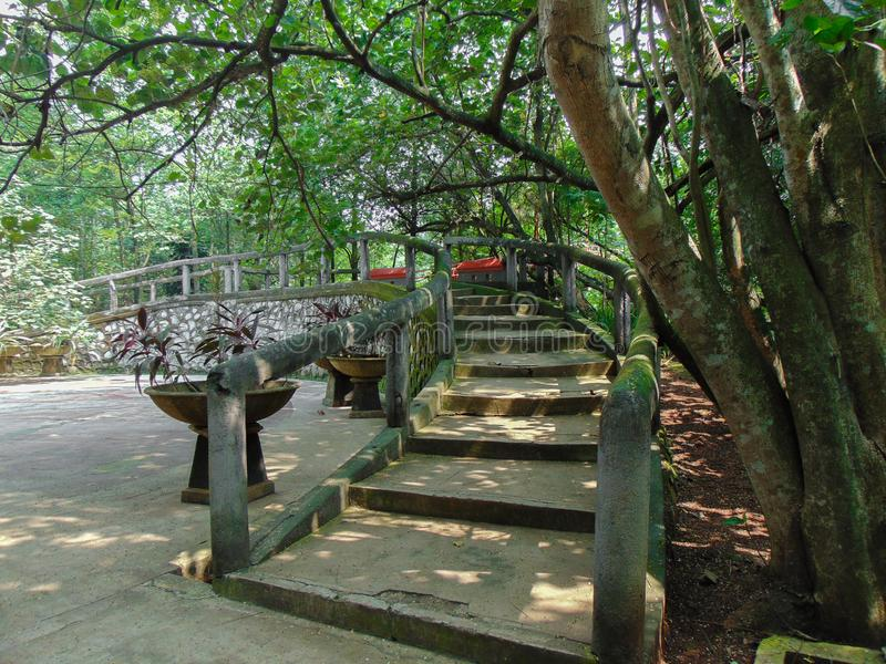 Stairs in a forest royalty free stock photos