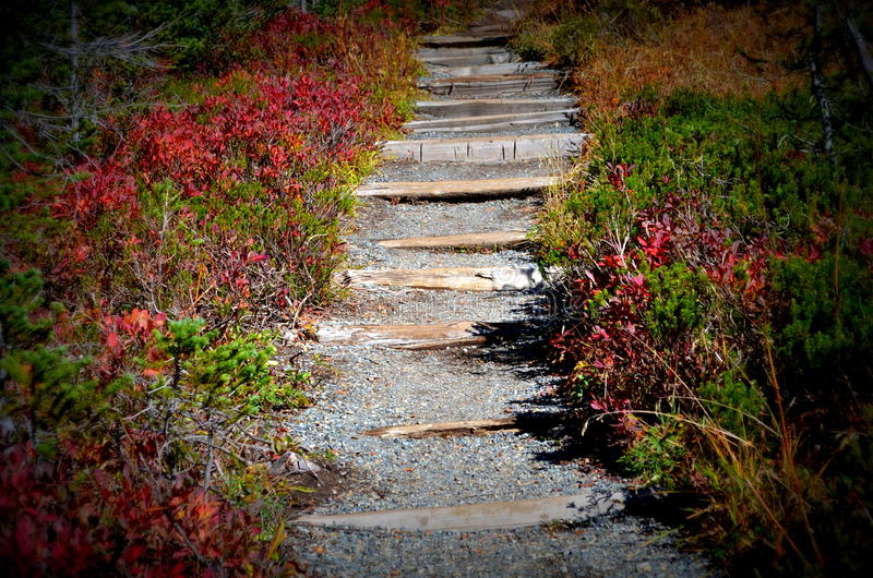 Stairs on hiking trail, Mt. Rainier National Park royalty free stock photography