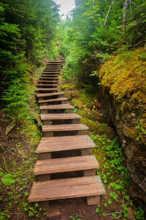Stairs leading up into forest royalty free stock photo