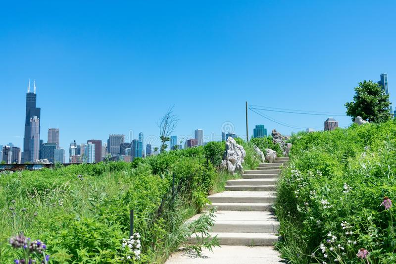 Stairs lined with Native Plants and Decorative Rocks at a Park in Chinatown Chicago with the Skyline royalty free stock photos