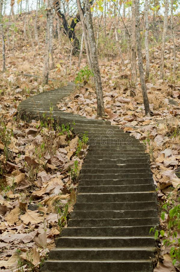 Stairs in the middle of the forest and dried leaves. Make a mystical feelings royalty free stock photos