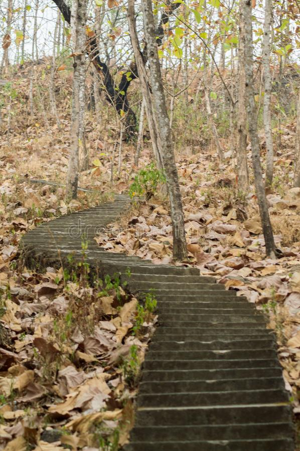 Stairs in the middle of the forest and dried leaves. Make a mystical feelings royalty free stock photography