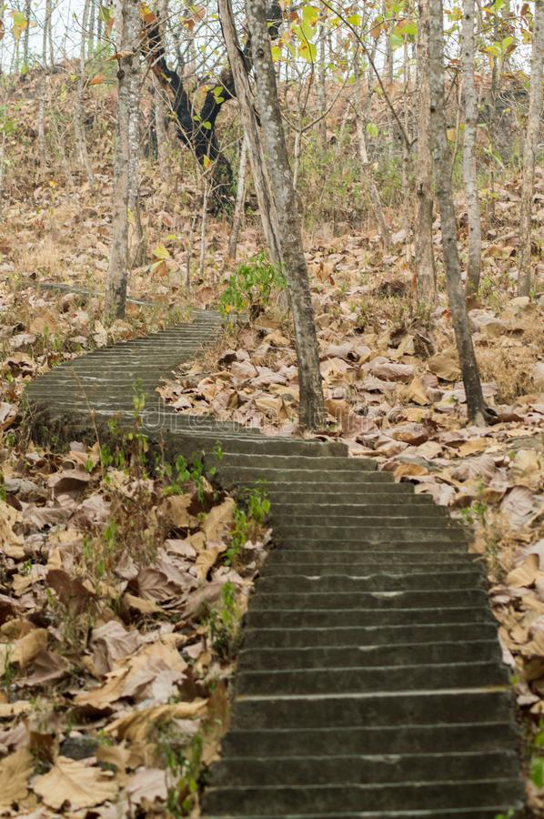Stairs in the middle of the forest and dried leaves. Make a mystical feelings stock image