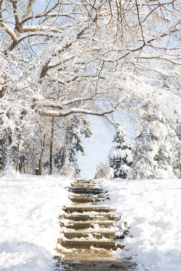 Stairs in the snow royalty free stock photography