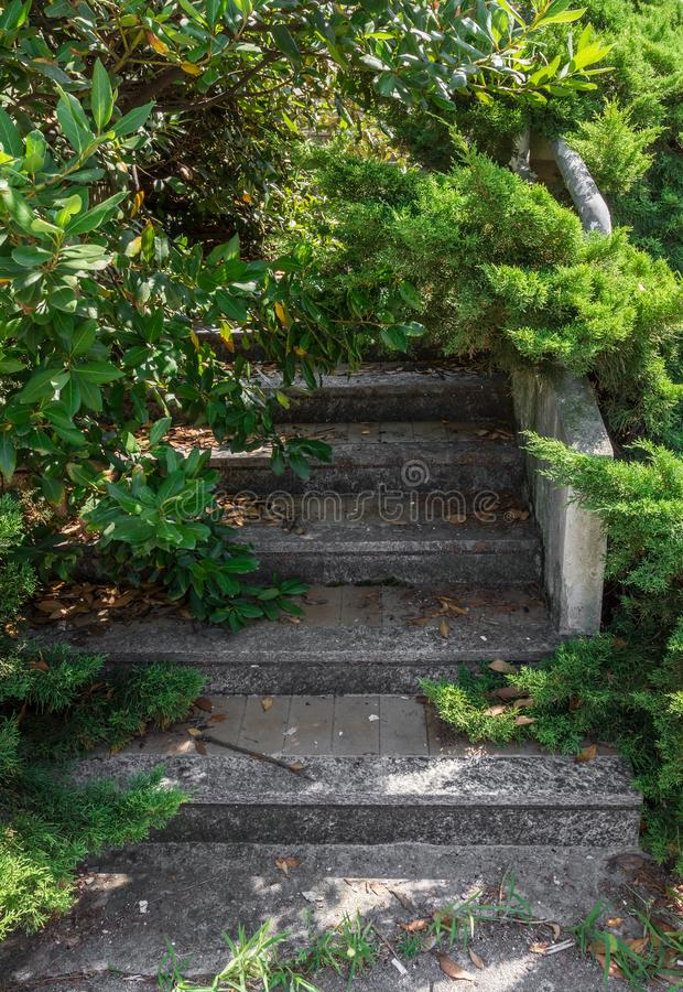 Stairs and surrounding vegetation royalty free stock photo