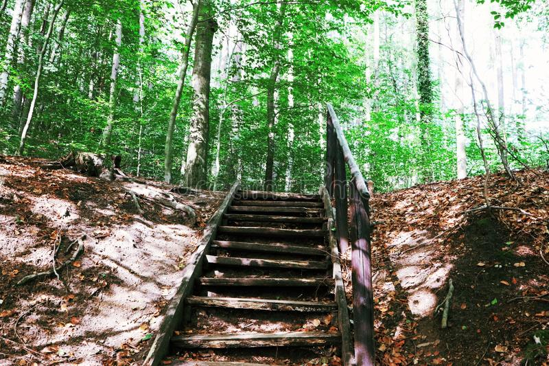 the stairs to the top, into the woods stock photo