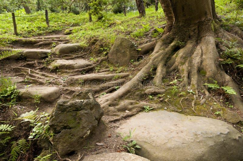 Stairs and tree in japaneese garden Sankei-en. Yokohama, Japan royalty free stock images