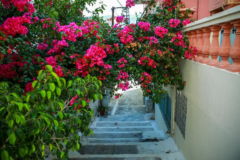 Stairs on village street in Greek small town , white and colorful houses and trees, Greece stock photo