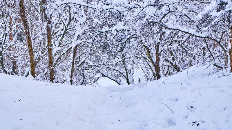 Stairs in winter park covered with snow. royalty free stock images