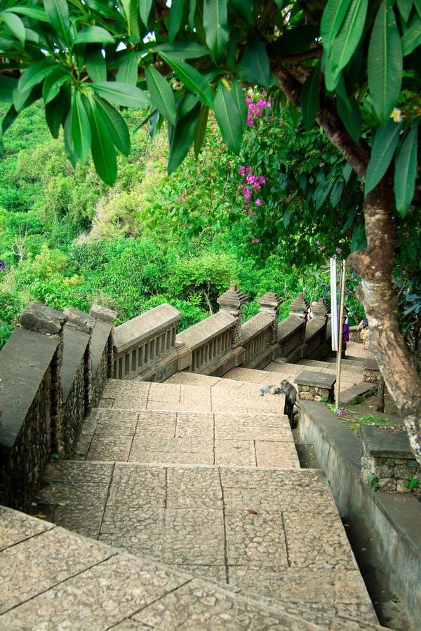 Stairway к джунглям стоковое изображение