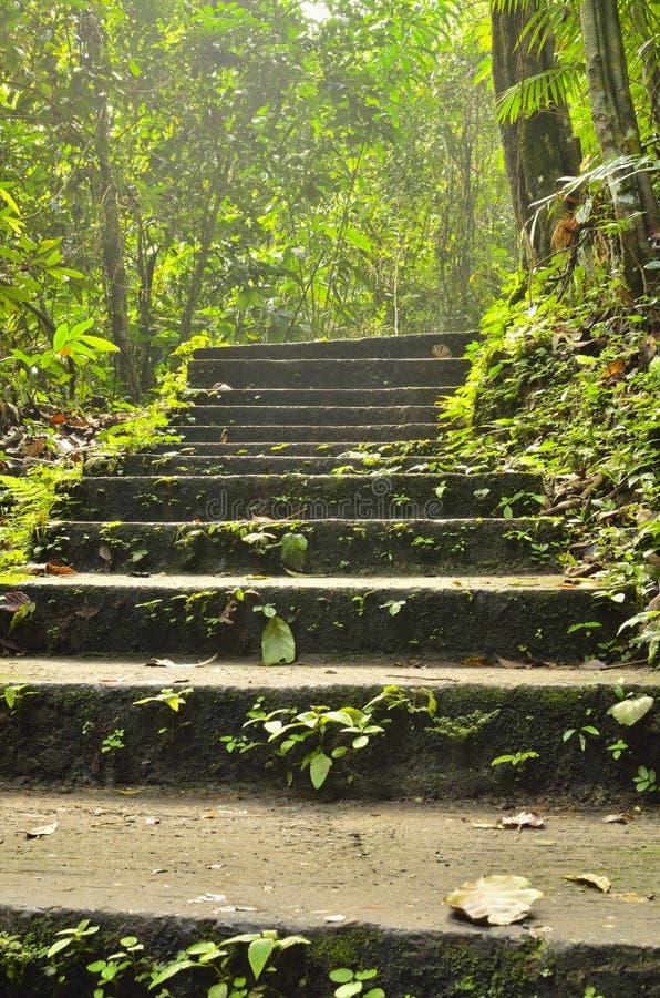 Stairway к джунглям стоковые изображения rf