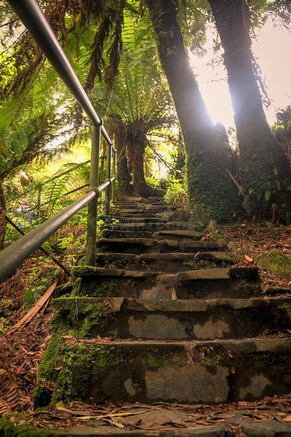 stairway стоковая фотография