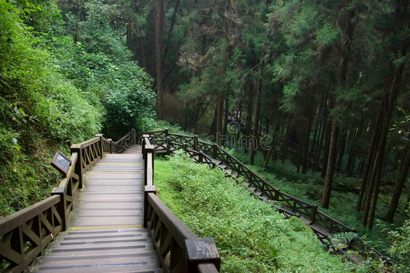 Stairway in Alishan. Alishan National Forest Recreation Area is situated in Alishan Township of Chiayi County. The main recreation site is situated at about 2 stock photos
