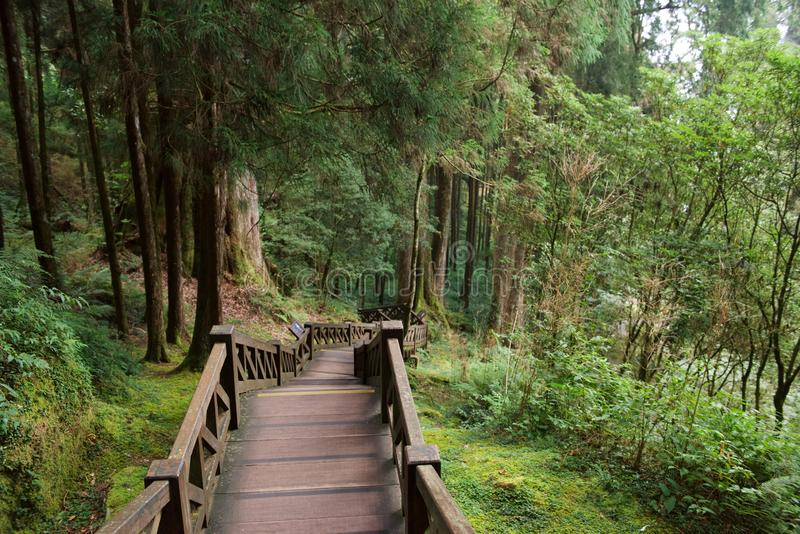 Stairway in Alishan. Alishan National Forest Recreation Area is situated in Alishan Township of Chiayi County. The main recreation site is situated at about 2 royalty free stock images