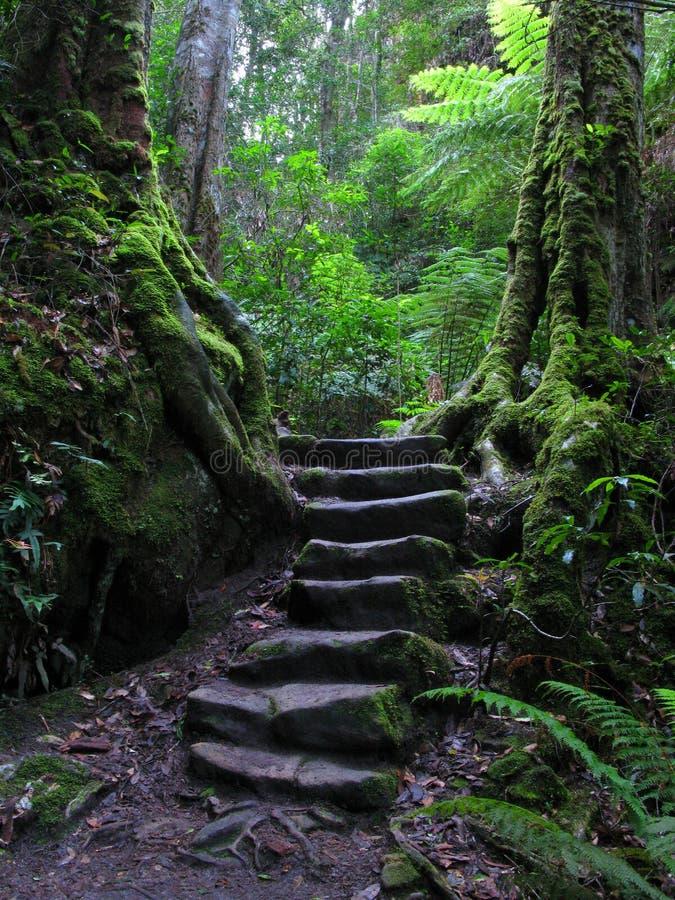 Stairway através da floresta húmida fotos de stock