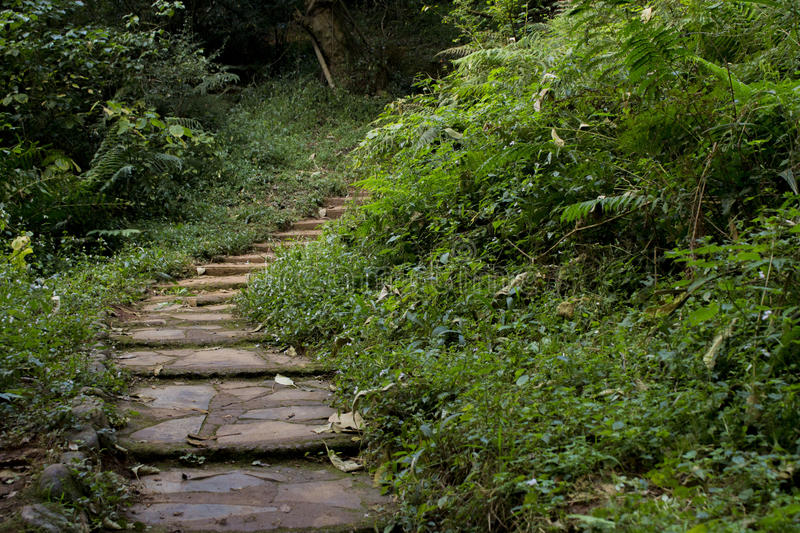 Stairway into the jungle near the Lone Creek Waterfall - Sabie, South Africa. stock photography