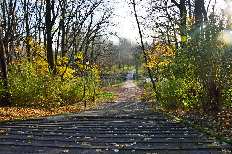Stairway in the park during last days of fall. Stairway in the park surrounded by golden and yellow leaves during last days of fall in Torun, Poland royalty free stock photography