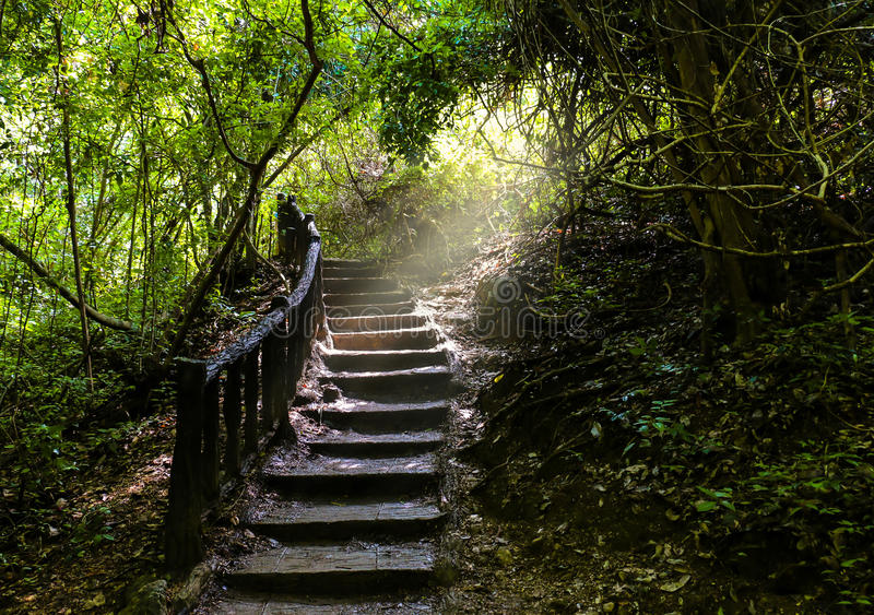 Stairway pathway going a long way up to freshly green dense forest. And waterfall on the mountain stock photos