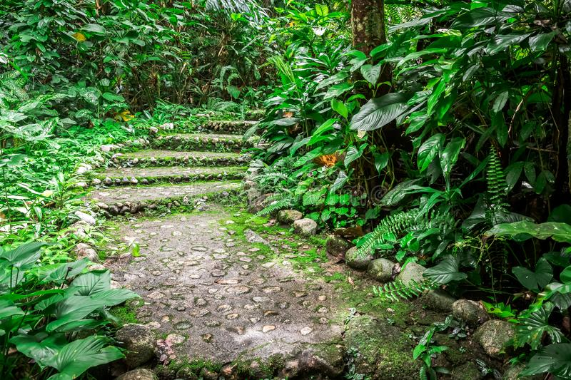 Stairway in Pliew Waterfall National Park, Thailand royalty free stock photography