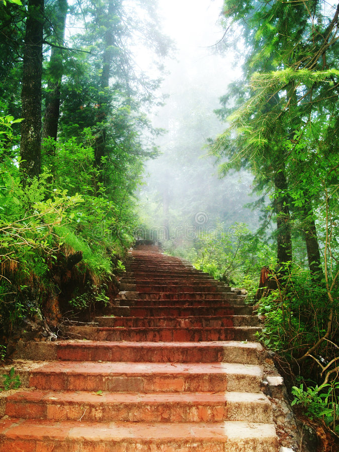 Free Stairway Through Forest Stock Photography - 5752532