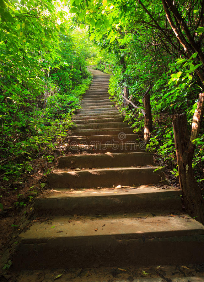 Free Stairway To Forest Royalty Free Stock Image - 21909206
