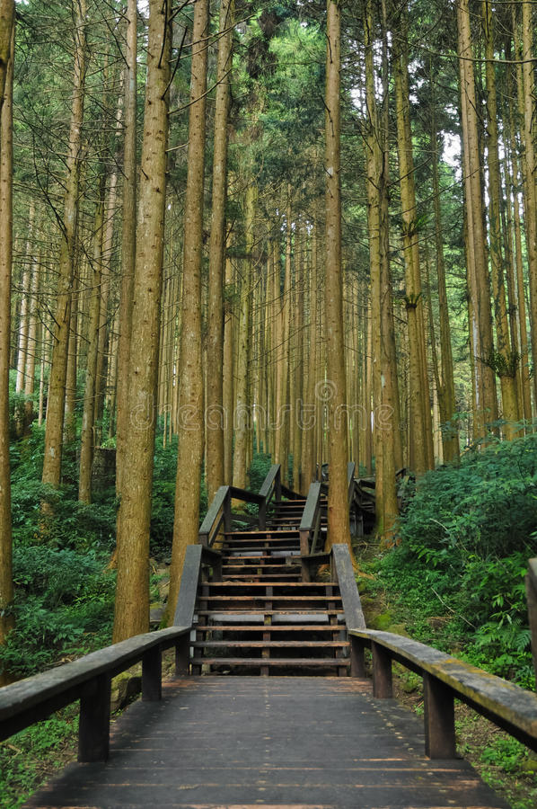 Stairways to bamboo ancient forest royalty free stock image