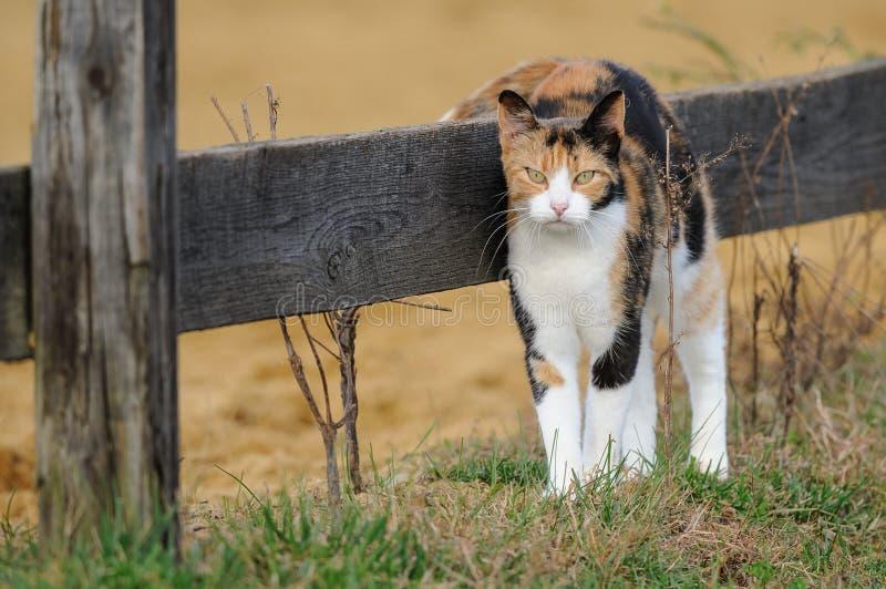 Stajnia Kot obrazy royalty free