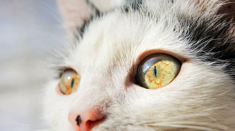 staken de grote gele ogen van de kat omhoog met licht aan stock fotografie