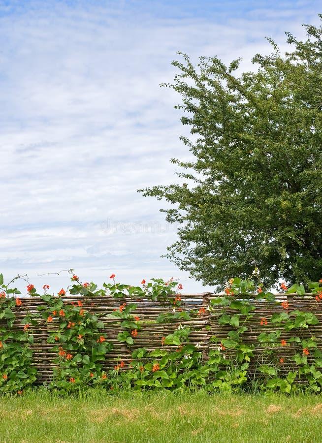 staket blommar lantligt fotografering för bildbyråer