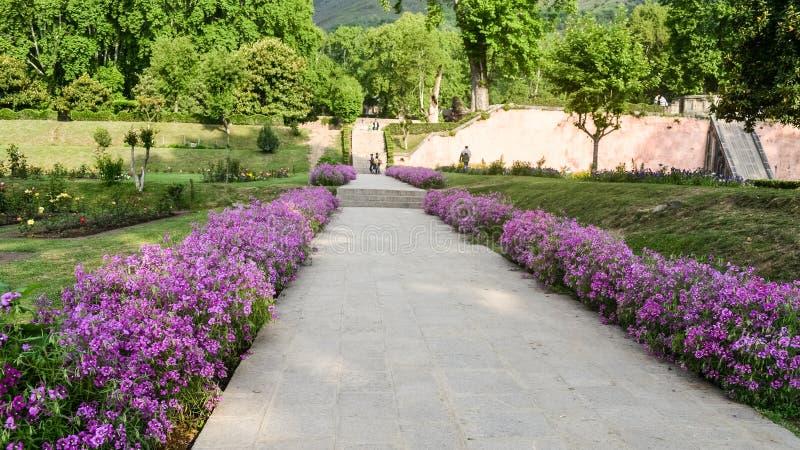 Staket för bana för bakgårdträdgårdsten med härliga höstblommor och gräs som upp växer sidan av stenvägen Arbeta i trädgården run royaltyfri foto