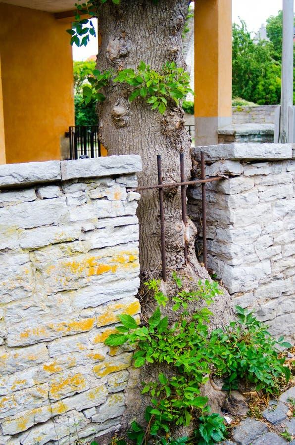 Staket i träd royaltyfria foton
