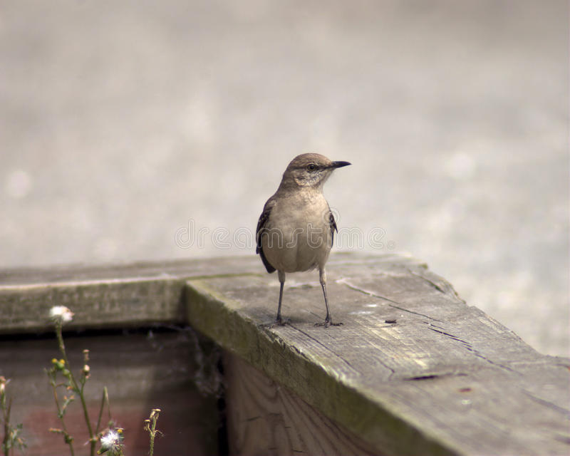 stakethärmfågel royaltyfri foto
